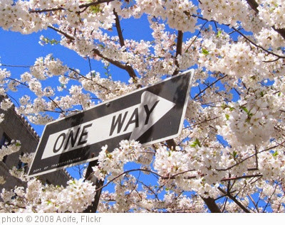 'One Way to Flowerland' photo (c) 2008, Aoife - license: https://creativecommons.org/licenses/by/2.0/