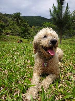 Dogs Trekking 6 (7_1) (16)