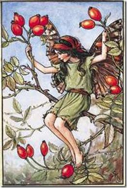 rosehip fairy