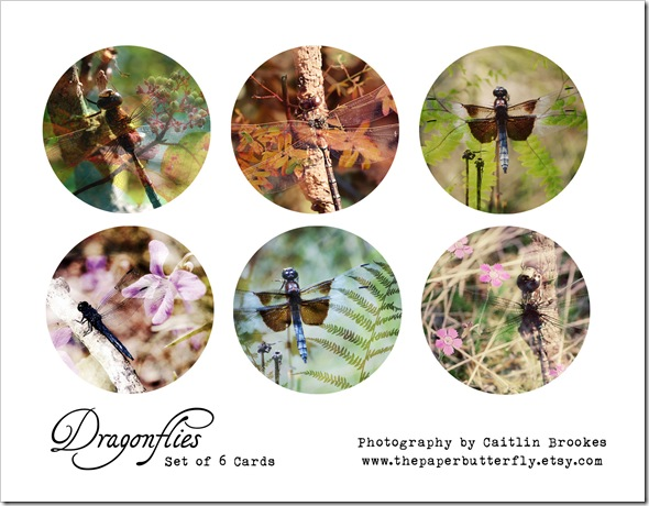 DRAGONFLY CARD BOX ONE
