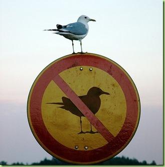 irony-bird1