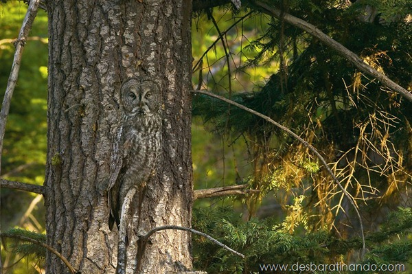 camuflagem-invisivel-animal-camouflage-photography-art-wolfe-desbaratinando (1)