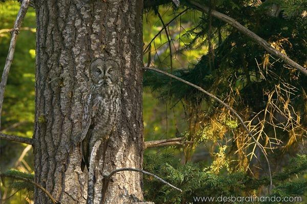 camuflagem-invisivel-animal-camouflage-photography-art-wolfe-desbaratinando (1)