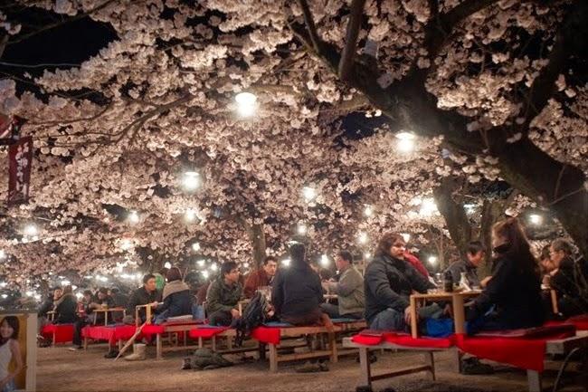 Kyoto, Japan__DSC0840