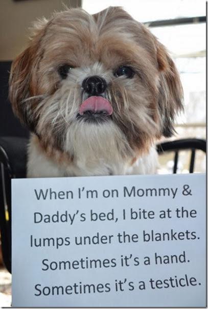 dogs-dirty-secrets-6