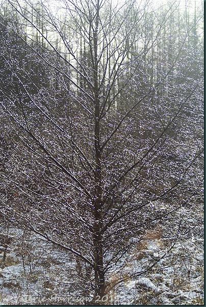 12-sparkling-tree