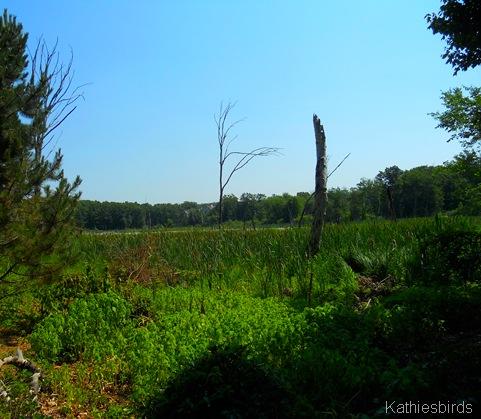 5. SW corner view summer bog 2012-kab