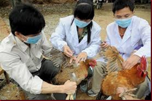 Virus H7N9 Flu Burung Renggut 9 Nyawa Di China