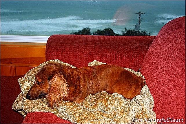 Beach Getaway - Joey Awake