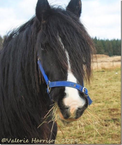 13-horse