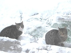 snowstorm 1.20.2012 Jr and Muffy