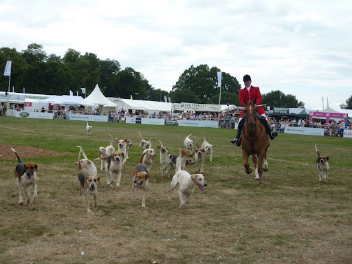 CLA Game Fair SHH Hound Parade at Ragley Hall 25.07 (72).JPG