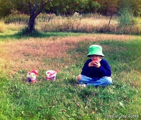 M eating an apple right in the middle of the orchard