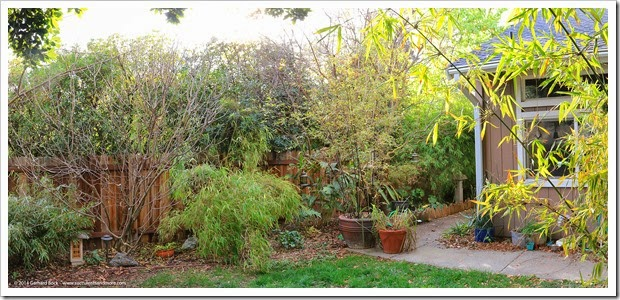 140225_backyard_pano
