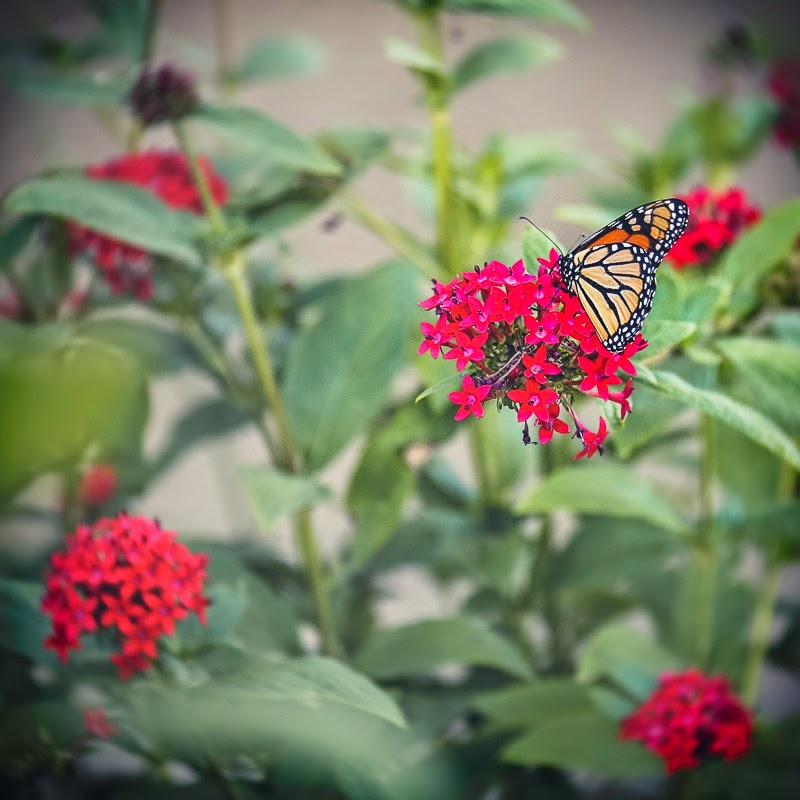 caterpillars-22