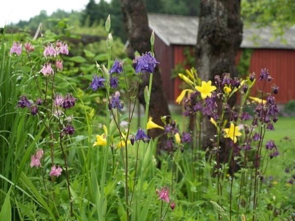 2011-06-06 Hagen i juni (92)