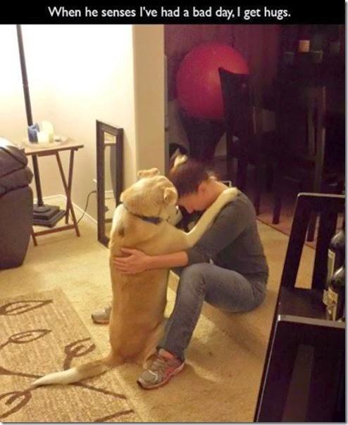 dogs-best-friend-003
