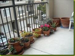 lavendar study february 2012 a