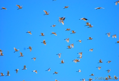 7. sky full of birds-kab