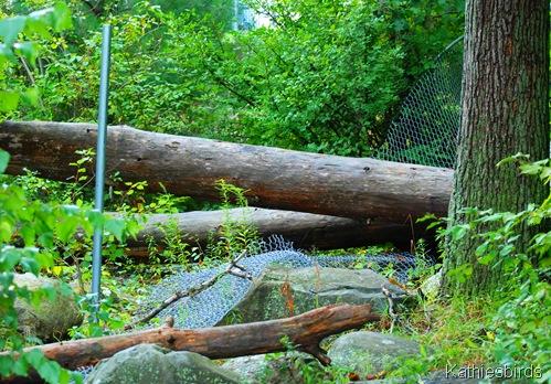 8. trees down-kab