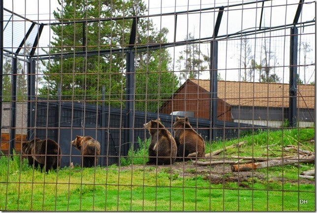 08-06-14 Grizzly and Wolf Discovery Center (216)