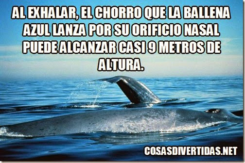 ballena exalar 1