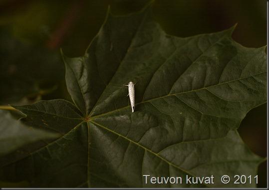 perhoset sarvijaakko 033
