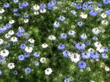 2014.07.19-054 jardin des plantes