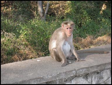 Unaffectionate Monkey