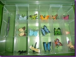 butterflies 012