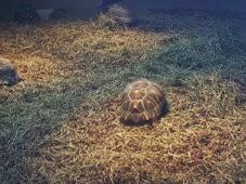 2014.04.21-060 tortues rayonnées