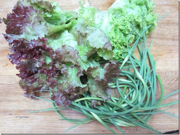 lettuce_n_scapes