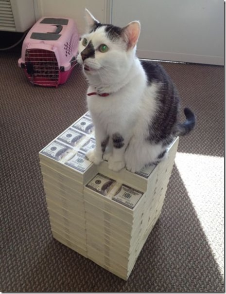 rich-wealthy-cats-8