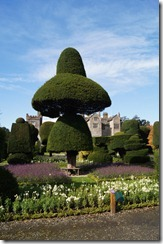 levens hall topiary 15