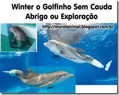winter-golfinho-cauda