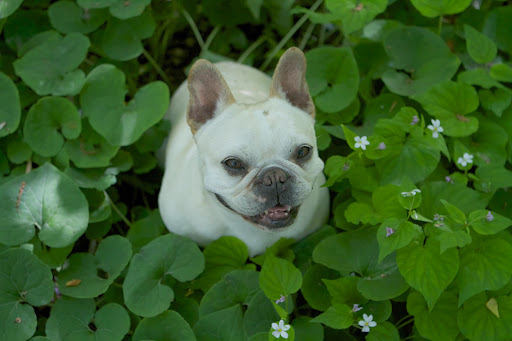 Francesca, don't I look adorable sitting in this lush woodland?