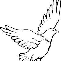aigles-02.jpg