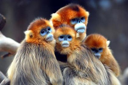 monkey_0987systd