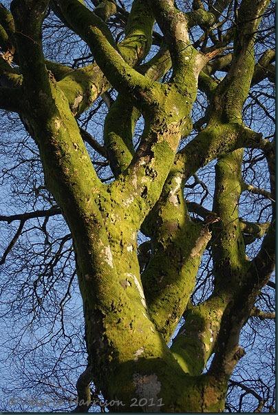 4-green-tree