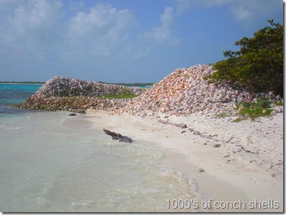 Conch Shells at Crasqui, Los Roques