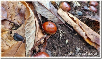 chestnuts3