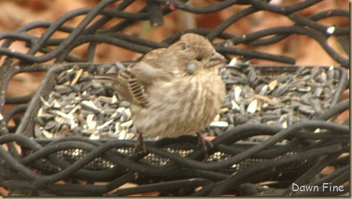 Feeder birds_042