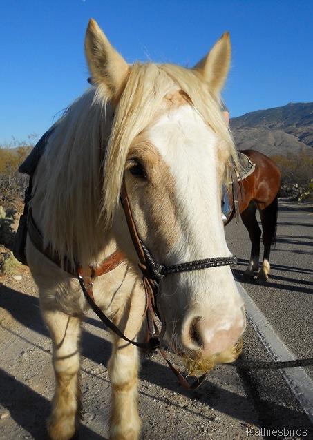 2. santa Horse-kab