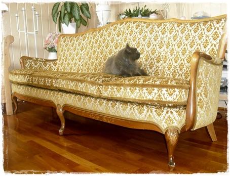 sofaen med katt