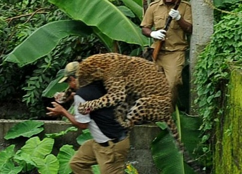 The leopard attacks a forest guard at Prakash Nagar village near Salugara in north-east India