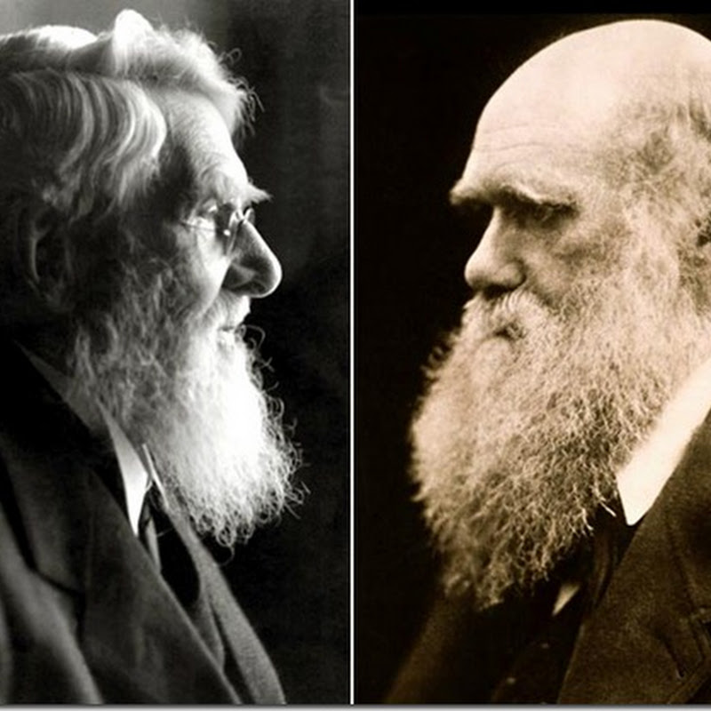 "Resumo e Resenha do Artigo ""A Comparative Analysis of the Darwin-Wallace Papers and the Decelopment of the Concept of Natual Seletion"""