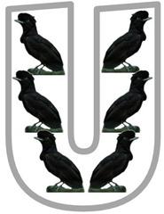 Uu Umbrellabird