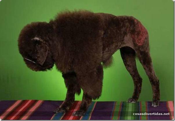 cosasdivertidas animales teñidos  (21)