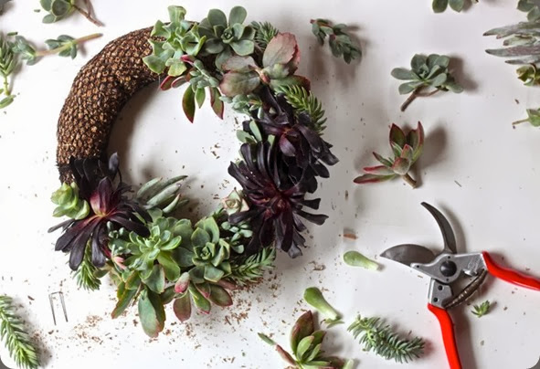 DIY Succulent Wreath layering plants, Gardenista