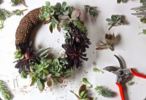 DIY Succulent Wreath layering plants, Gardenista